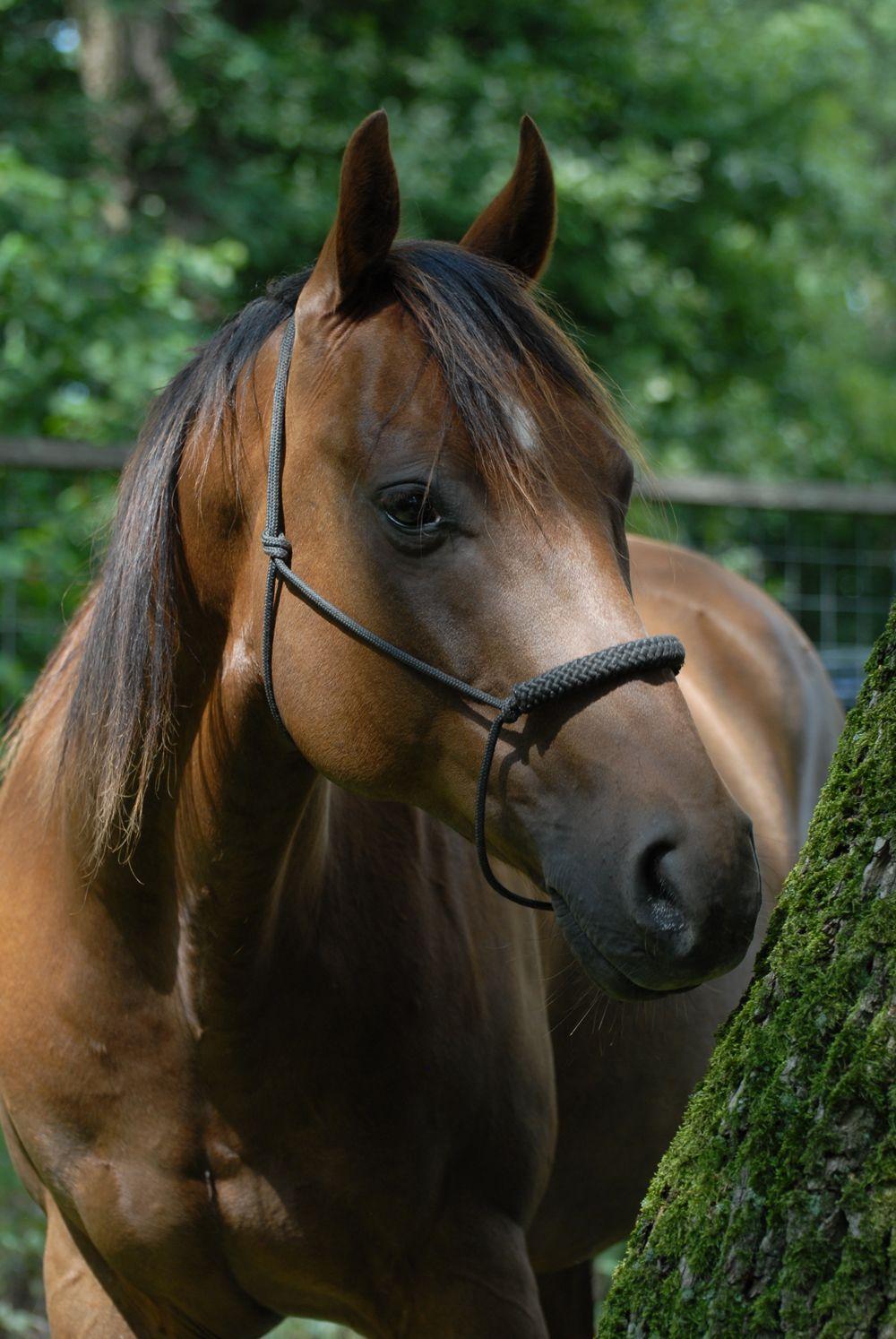 Pepper één van de paarden waar mee gecoacht wordt   Samen paardencoaching   Heelsum