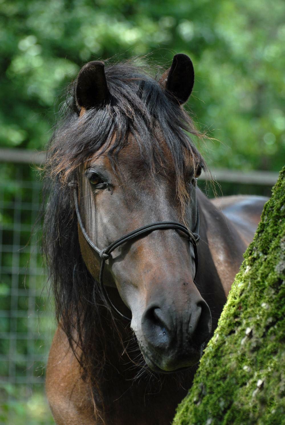 Esplendido één van de paarden waar mee gecoacht wordt   Samen paardencoaching   Heelsum